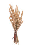 пшеница ветви Стоковые Фото