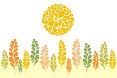 пшеница восхода солнца поля Стоковое Изображение RF