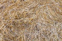 пшеница выпарок изображения сена крупного плана предпосылки Стоковые Фото