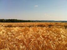 Пшеница в Ла Франции Стоковые Изображения