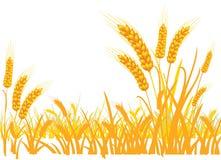 Пшеница в поле на белой предпосылке бесплатная иллюстрация
