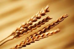 пшеница детали Стоковое Изображение