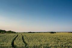 пшеница лета поля дня горячая Стоковая Фотография RF