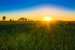 пшеница захода солнца поля Стоковые Фото