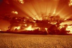 пшеница захода солнца предпосылки зрелая Стоковые Изображения RF