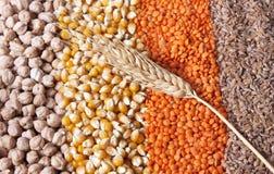 пшеница зерен Стоковые Фотографии RF