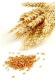 пшеница зерна Стоковое Изображение