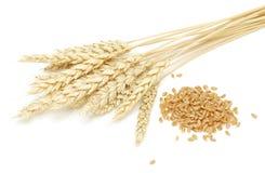 пшеница зерна Стоковая Фотография RF
