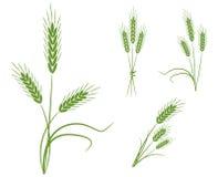 пшеница икон иллюстрация вектора