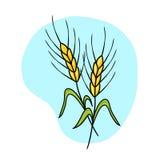 пшеница иллюстрации ушей Стоковое Изображение RF
