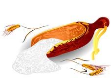 Пшеница и мука иллюстрация вектора