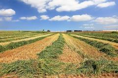 пшеница кибуц хлебоуборки полей Стоковые Фотографии RF