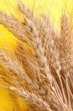 пшеница колосков Стоковые Изображения RF