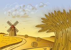 пшеница ландшафта полей Стоковые Изображения RF