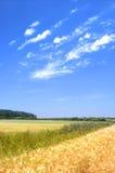 пшеница лета поля Стоковые Фото