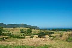 пшеница моря Стоковое фото RF