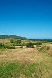 пшеница моря Стоковые Изображения RF