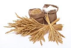 пшеница муки ушей Стоковое фото RF