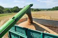 Пшеница нагрузки жатки зернокомбайна в тележке Стоковое Изображение RF