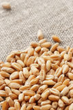 Пшеница на hessian стоковые фотографии rf