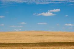 пшеница неба поля облаков Стоковое Изображение