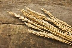 Пшеница осени Стоковое Изображение