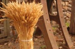 пшеница пакета Стоковая Фотография RF