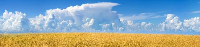 пшеница панорамы поля возмужалая Стоковые Изображения