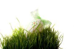 Пшеница пасхи зеленая молодая на белой предпосылке Стоковые Фото