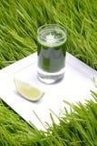 пшеница питья свежая Стоковое фото RF