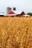 пшеница поля амбара Стоковая Фотография