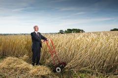 пшеница поля бизнесмена Стоковая Фотография