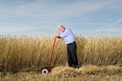 пшеница поля бизнесмена Стоковые Фото