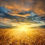 пшеница поля горизонтальная Стоковая Фотография