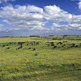 пшеница поля Стоковая Фотография