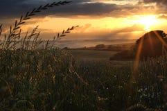 пшеница поля стоковые фото