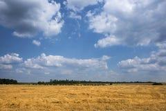 пшеница поля dof золотистая отмелая вертикальная Стоковые Фото