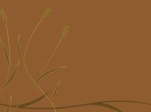 пшеница предпосылки золотистая Стоковая Фотография RF