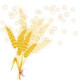 пшеница предпосылки Стоковые Изображения