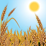 пшеница предпосылки иллюстрация штока