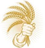пшеница пригорошни хуторянина счастливая Стоковая Фотография RF