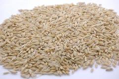 пшеница пригорошни стоковые фото