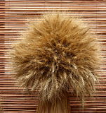 пшеница пука Стоковое фото RF