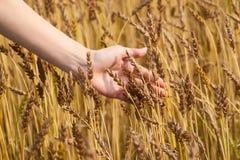 пшеница руки девушки поля Стоковое Изображение