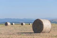 Пшеница свертывает на поле земледелия Стоковые Изображения