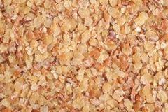 пшеница семенозачатка Стоковые Фото