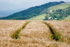 пшеница следов поля зеленая Стоковые Фото
