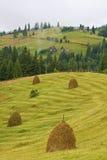 пшеница снопов хлебоуборки Стоковая Фотография RF
