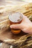 Пшеница Стеклянное пиво Лето напольно Стоковые Фото