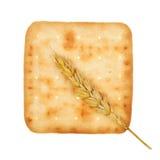 пшеница сыра печенья Стоковые Изображения RF